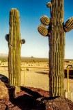 Cactus, Nevada