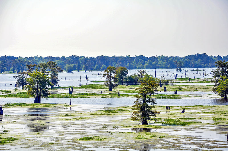 Atchafalaya River, Louisiana