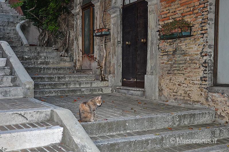 Gatto di Corinaldo (AN)