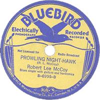Prowling Nighthawk