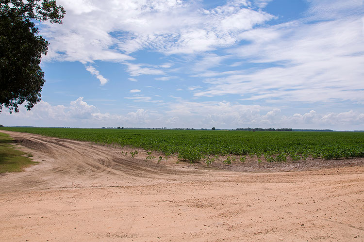 Stovall Farms, Coahoma County, Mississippi