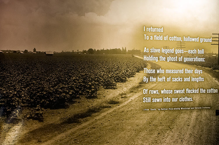 Cotton field and Natasha Trethewey sentence at the B.B. King Museum in Indianola, Mississippi