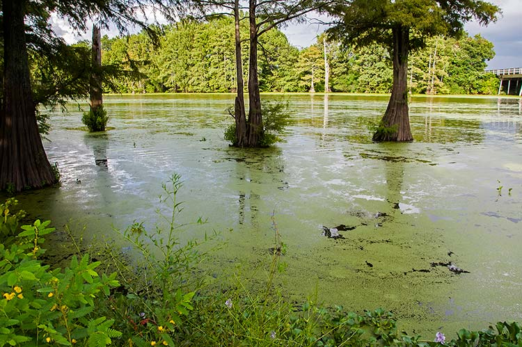 Roebuck Lake, Itta Bena, Mississippi
