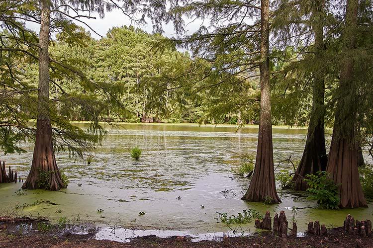 Roebuck Lake, Itta Bena