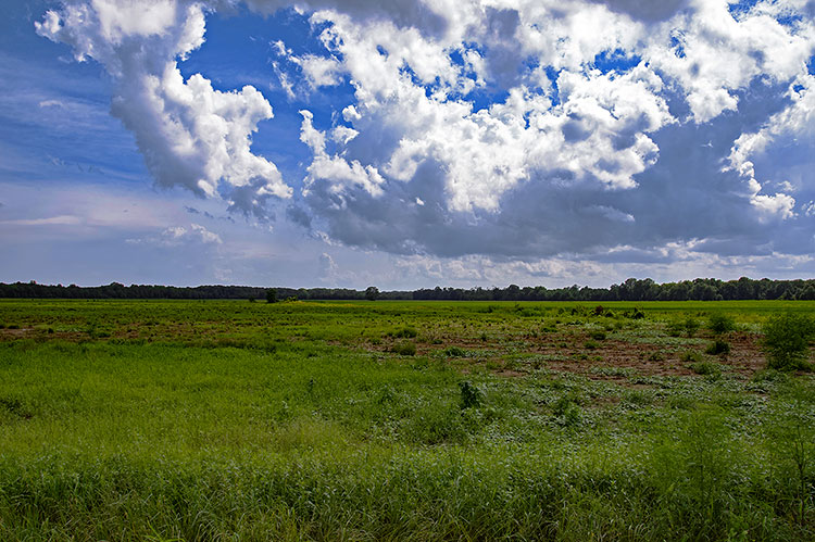 Hillside National Wildlife Refuge, Tchula, Mississippi