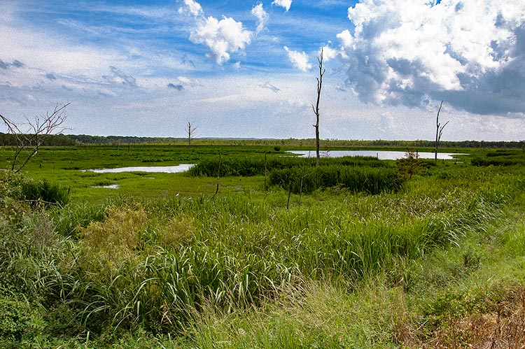 Hillside Floodway Levee, Mississippi