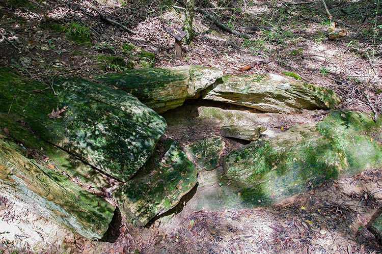 Petrified Forest, Flora, Ms